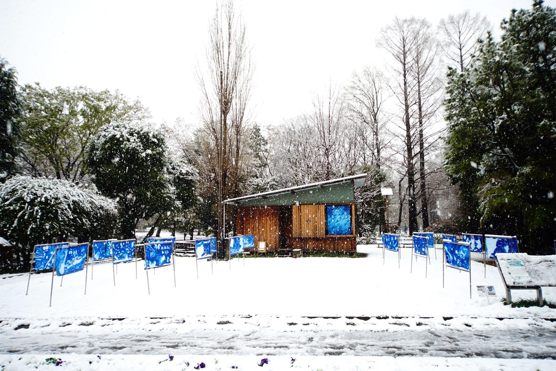 3/29には季節外れの雪がふり、幻想的な雰囲気となった